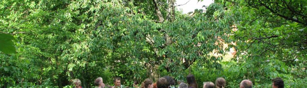 Wildpflanzenführung im Friedensgarten